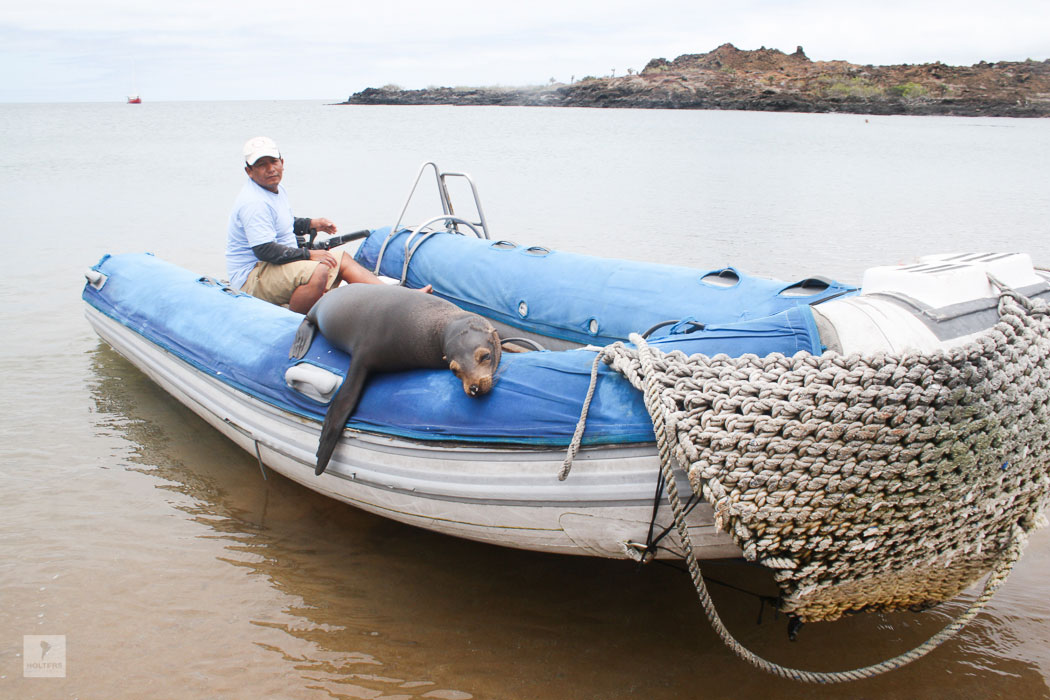 Seelöwen Passagier