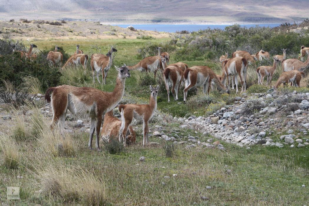 holters-suedamerika-chile-argentinien-54