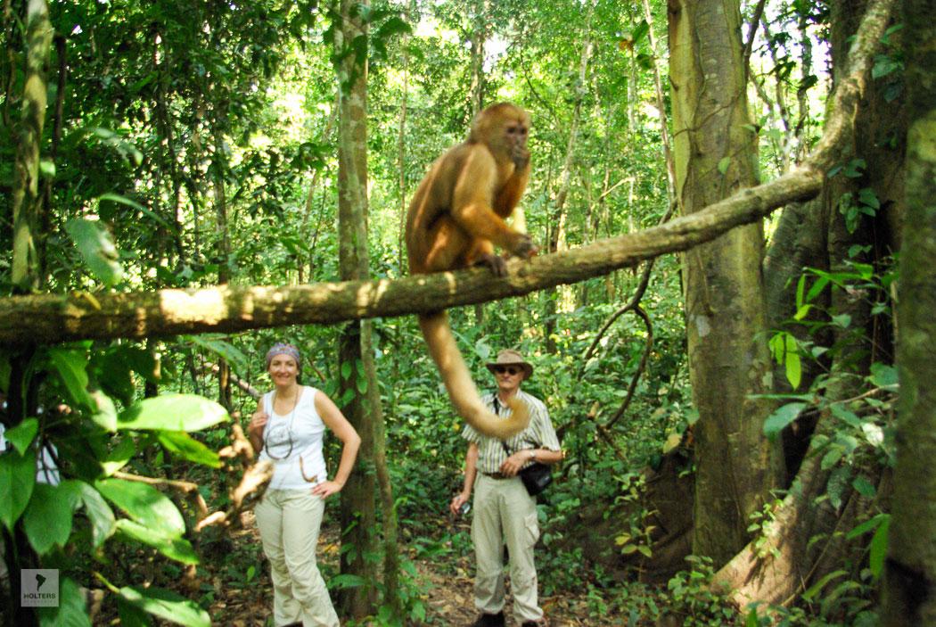 Exkursion im Dschungel