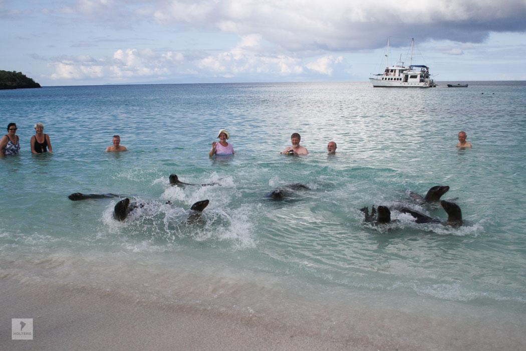 Badespass mit Seelöwen