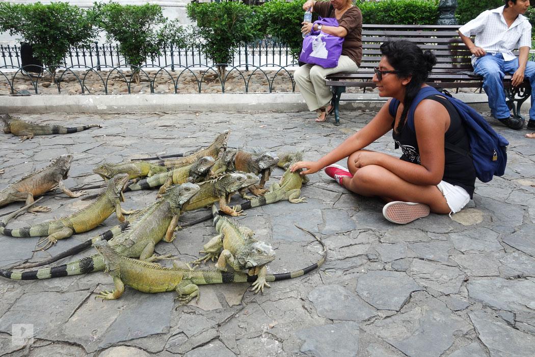 Leguanpark in Guayaquil